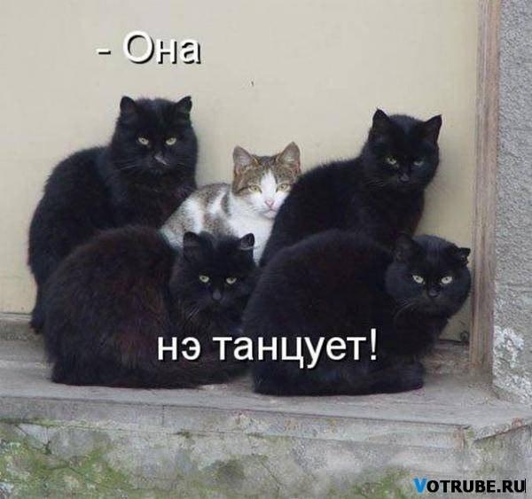 смешные черные коты окружили кошку