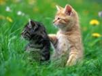 Фото рыженьких котят и котов: смотрите и улыбайтесь!