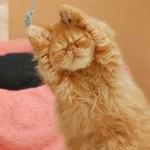Почему кошки спят так много?