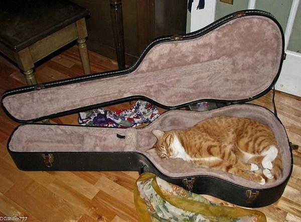 кот рыжий спит в футляре от гитары