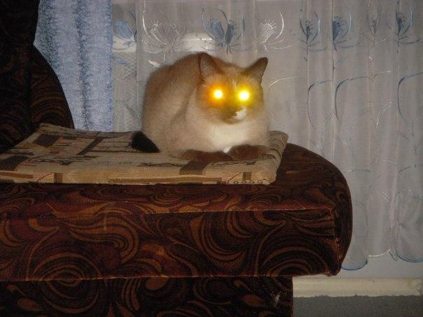 кот глаза светятся