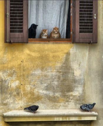 три кота смотрят на голубей