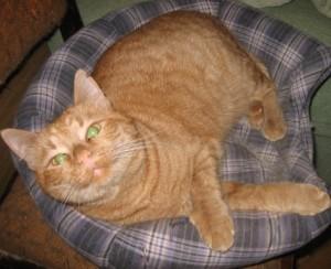 рыжий кот смотрит мило