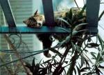 Комнатные растения и кошки