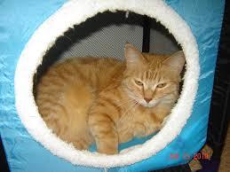 рыжий кот в домике