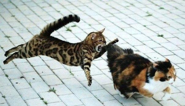 Корма среднего класса для кошек
