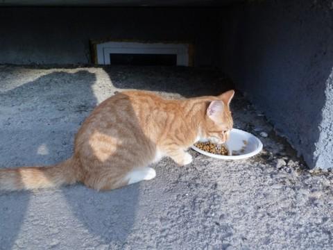 кот рыжий корм сухой