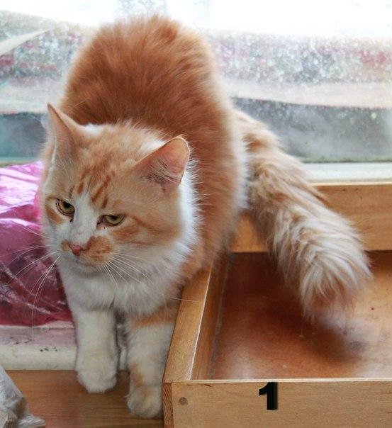 кот кошка красивый рыжий милый сидит у окна