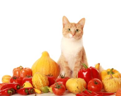 Витамины Радостин для кошек.