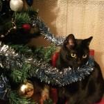 вкот черный елка украшения новый год