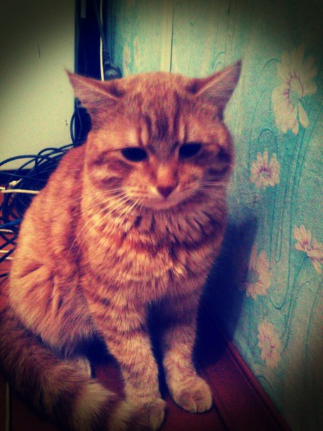 старый кот красивый