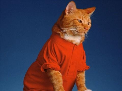 rp_red_cat_-19.jpg