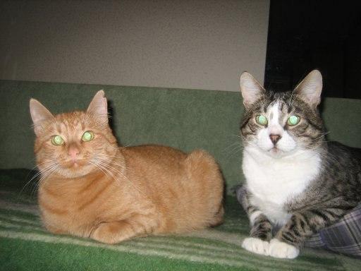 рыжий кот и полосатый красавцы лежат рядом