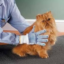 как постричь кота