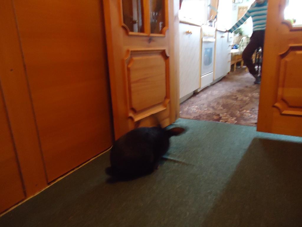 домашние животные и кролик