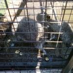 милые животные в клетке