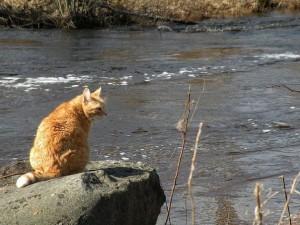 кот рыжий сидит у реки