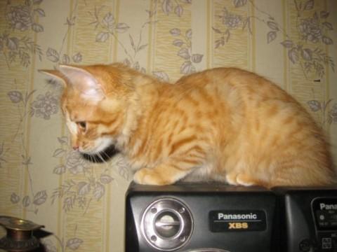 рыжий-котик-на магнитофоне