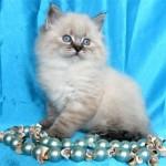 Почему у котенка большой живот?