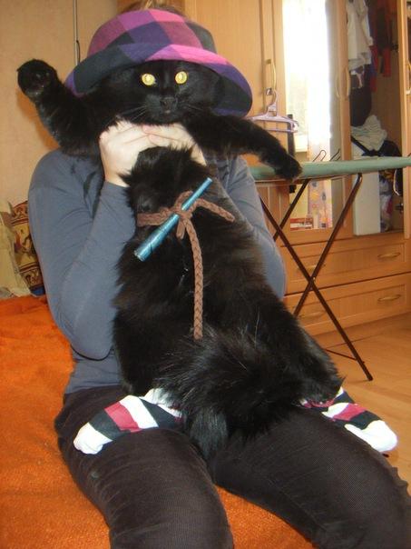 фото черный кот у девушки на руках большой