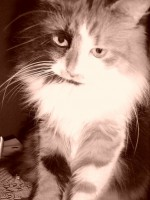 Хакеры уналовчились взламывать Wi-Fi с помощью кошачьих ошейников