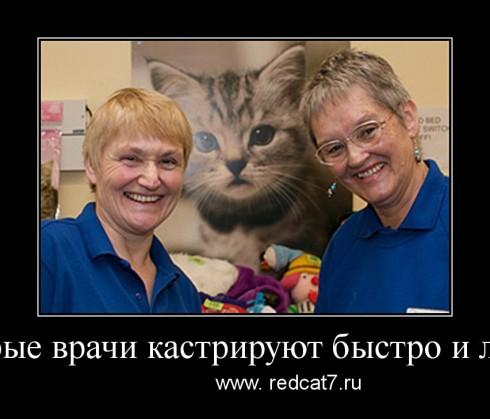 кастрация кота врачи демотиватор