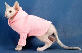 Одежда для лысых кошек