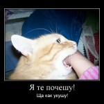 Кот подбежит, укусит и убегает