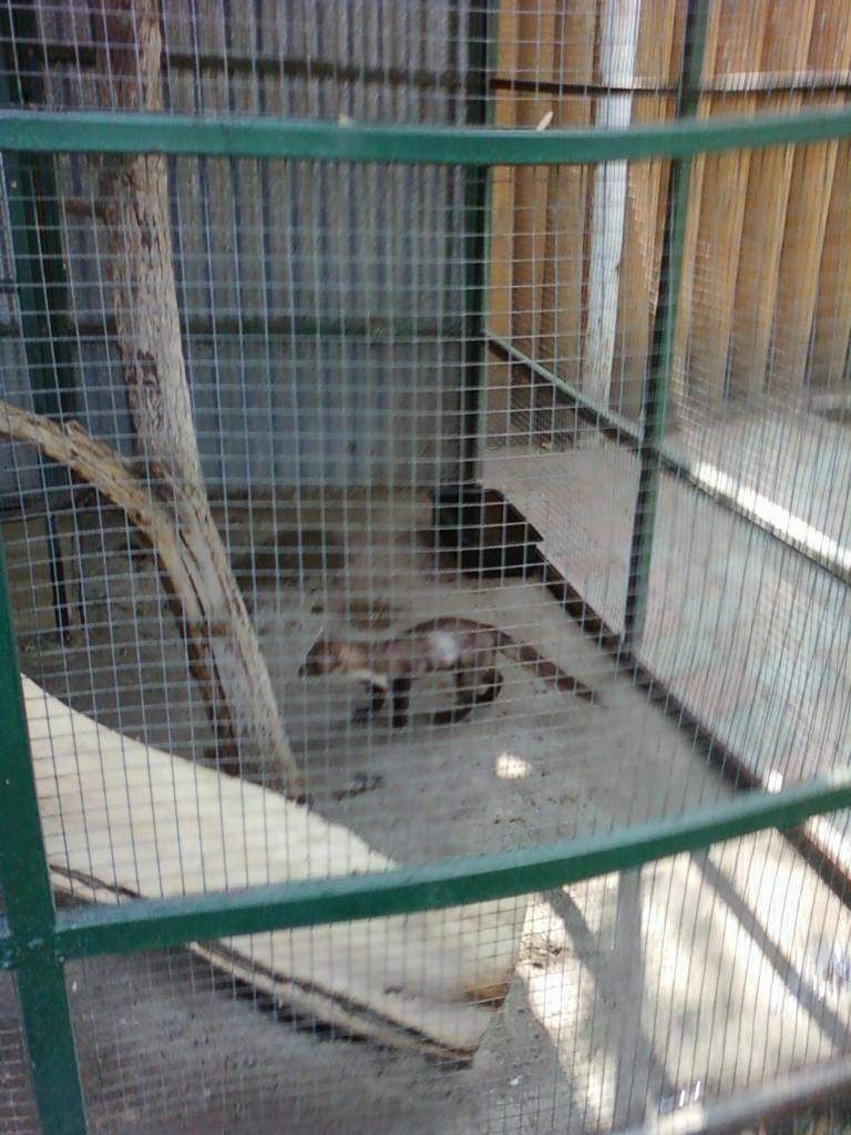 нижний новгород сормовский парк лимпопо зоопарк фотографии животных