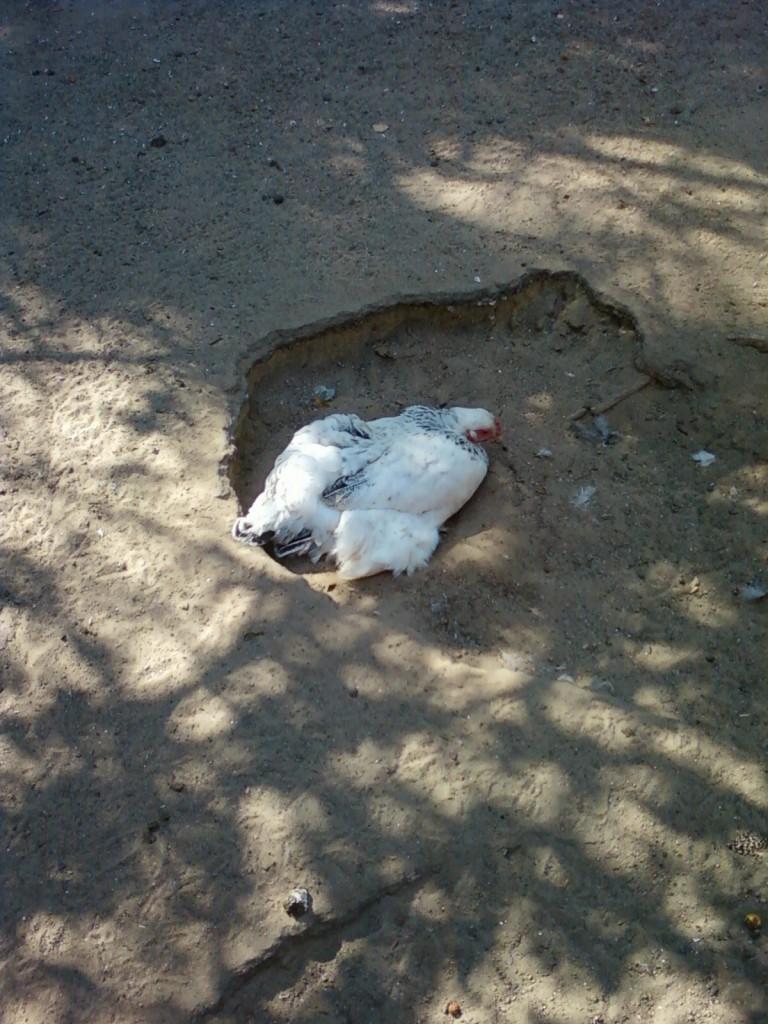 фотографии нижний новгород зоопарк Сормовский животные