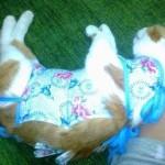 Кошка сняла попону после стерилизации