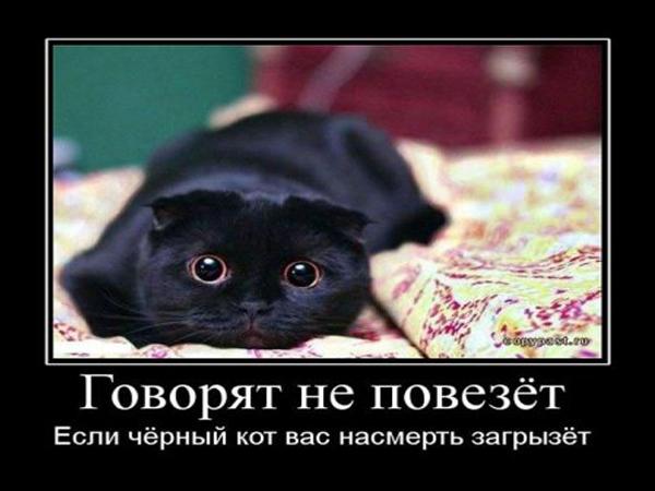 мотиватор черный кот