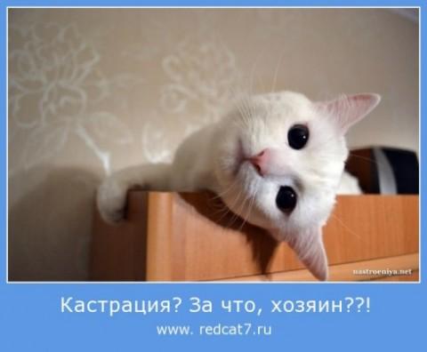 Кот после кастрации вялый