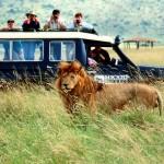 Сафари в Африке и животные