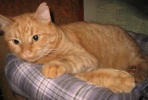 Характер кота после кастрации