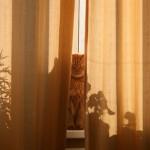 Рыжие коты в Буздяке