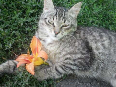фотография кошка серая с цветком
