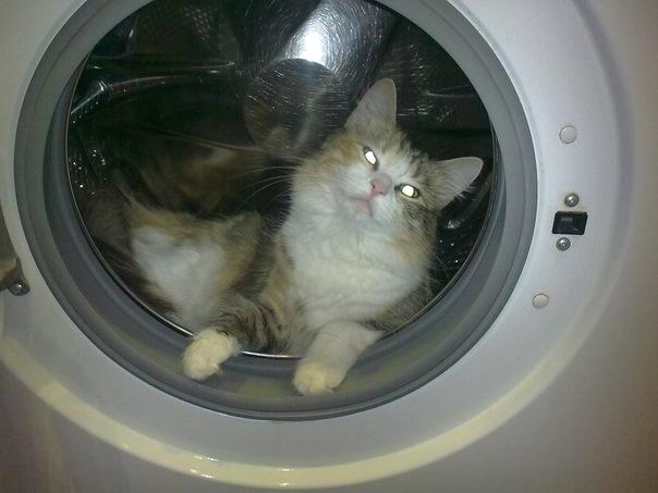 Напоите кошку водой в стиральной машинке кошки