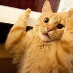 рыжий кот лапы кверху рот открыт смотрит широко в глаза
