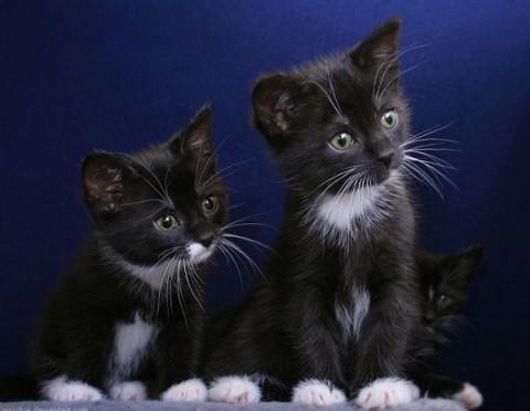 два черных котенка смотрят в сторону забано