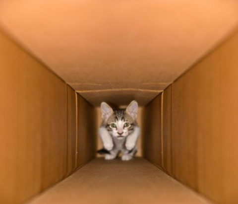 котенок маленький в коробке