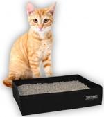 Как выбрать наполнитель и лоток для кошачьего туалета