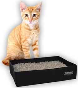рыжий кот возле лотка