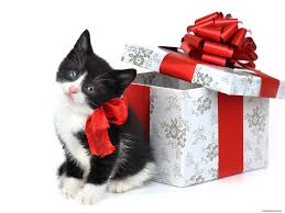 фото кошка новый год костюм
