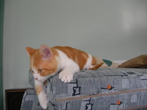 рыжий котенок на диване лежит