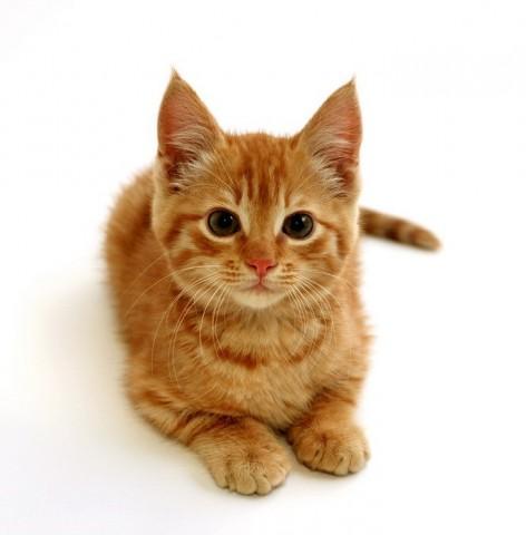 28643061_redcat