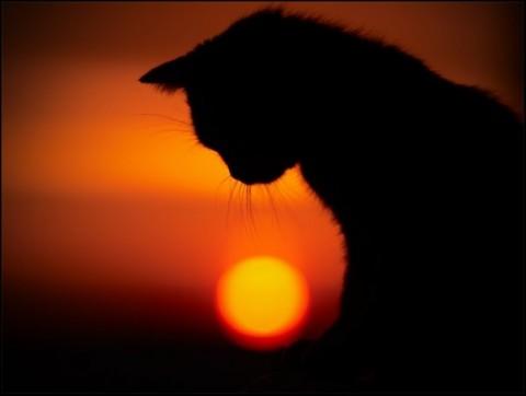кот закат