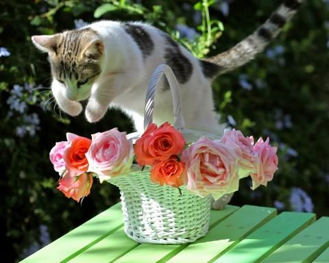 фото кошка красиво прыгает через цветы