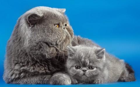 мама кошка с котенком