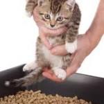 котенок в лоток кладут